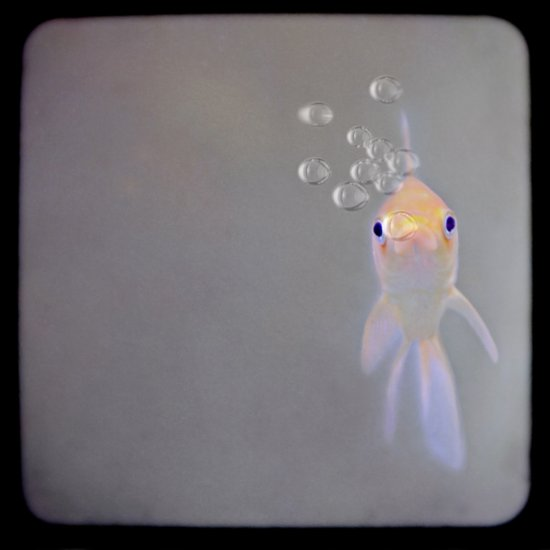 You looking at me, fishy?  Canvas Print