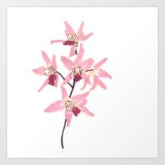 Pink Orchid Flower Art Print