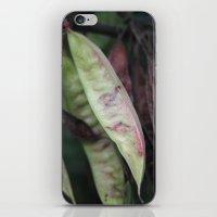 Carob iPhone & iPod Skin