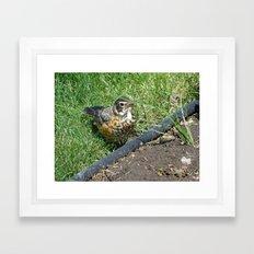 Birds No.2 - Part No.2 Framed Art Print