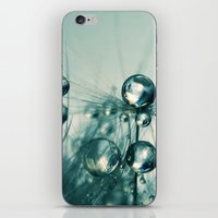 One Seed with Blue Drops iPhone & iPod Skin