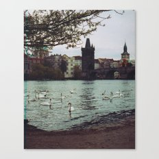 PRAGUE SWANS Canvas Print