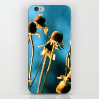 Light Of The Sun iPhone & iPod Skin