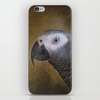 African grey parrot iPhone & iPod Skin