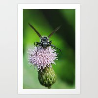 Bee And A Flower Art Print