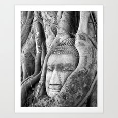 Buddha Head in Tree Art Print
