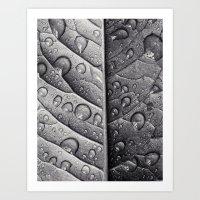 Silver Leaf Art Print