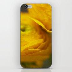 Soft Ranunculus iPhone & iPod Skin