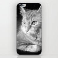 Classic Cat Clementine  iPhone & iPod Skin
