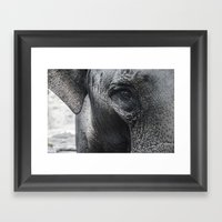 Elephant Eye Framed Art Print