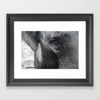 Elephant Eye Framed Art Print