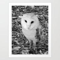 owl 2016 IV Art Print