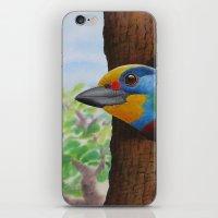 Beautiful Bird iPhone & iPod Skin