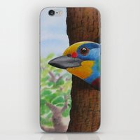 Beautiful Bird iPhone & iPod Skin