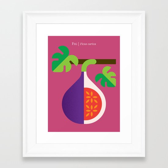 Fruit: Fig Framed Art Print
