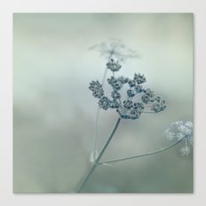 Pastel Herbs - Cow Parsl… Canvas Print