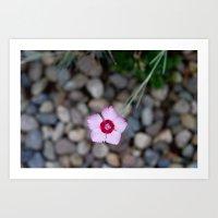Purple Flower 2 Art Print