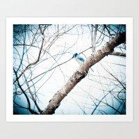 Mr Blue Jay Art Print