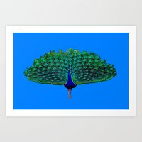 peacock Art Prints featuring Peacock by Crayle Vanest