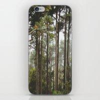 Early Morning Trees iPhone & iPod Skin