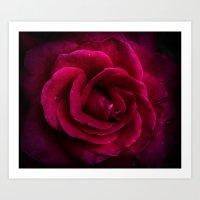 Texture Of A Rose Art Print