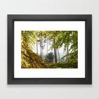 Pine Trees Viewed Throug… Framed Art Print