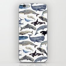 Whale Song iPhone & iPod Skin