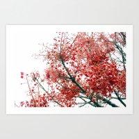 Star Berries Art Print