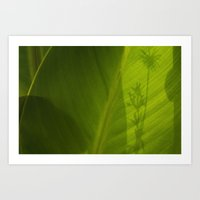 Green plant with shadow Art Print