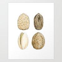Edible Nuts Art Print