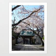 Sakura Spring Art Print