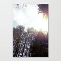 trees* Canvas Print