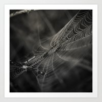 Early Morning's Magic II Art Print
