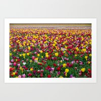 Fields Of Color II, Wood… Art Print