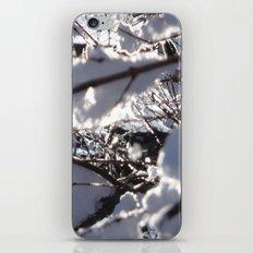 Glitter Reeds iPhone & iPod Skin