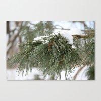 Winter Pine Canvas Print