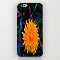 Dandelion of All Colors iPhone & iPod Skin