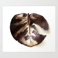 Single Dry Leaf Art Print