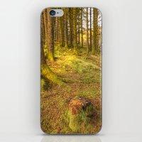 Stump Wood iPhone & iPod Skin