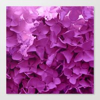 through the purple hydrangea Canvas Print