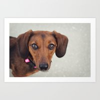 Doxie Dares You  Art Print