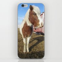 Mini Horse iPhone & iPod Skin