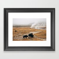 Mother Bison And Calf In… Framed Art Print