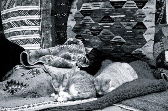 Marrakesh Cats IV Art Print