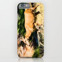 iPhone Cases featuring Red deer cow by Karl-Heinz Lüpke