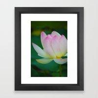 Lotus Blossom Flower 20 Framed Art Print