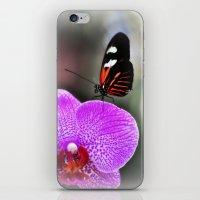 Butterfly Garden 3 iPhone & iPod Skin