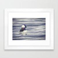 Bufflehead Framed Art Print