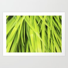 Summer Green Leaves Art Print