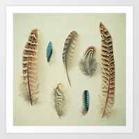 The Feather Collection Art Print